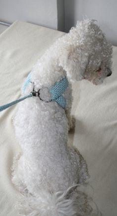Friendly DOG harness Matching leash Pets Harness  Small by BubaDog