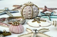seashells for crafting and decorating