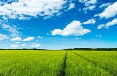 Gambar pemandangan sawah dengan langit biru
