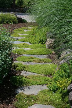 Mossy Stepping Stone Path traditional landscape