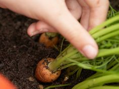 Veggie BFFs: Companion Planting for a Healthier Garden : Companion Planting : HGTVGardens