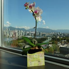 Thank you Luke for the kind words & the nice orchid! We also appreciate your participation in our Patient Timeline Program and look forward to following your transformation as you submit your photos!