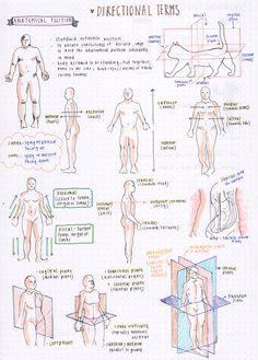 Body Cavities Quiz or Worksheet | Medical terminology ...