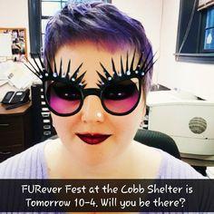 FURever Fest at the Cobb Shelter is Tomorrow Saturday November 5th 10-4.#MuttButs #AdoptDontShop #muttpic #adoption #PetAdoption