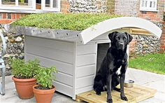 Dog kennel with green roof