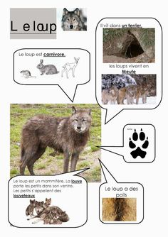 S'épanouir pour bien grandir: Histoire Roule galette, lecture et activités Science Activities, Classroom Activities, Animal Adaptations, French Classroom, Forest School, French Lessons, Elementary Science, Preschool Kindergarten, Learn French