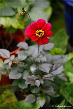 A look at what's new in my garden this July. Garden, Plants, Dahlia