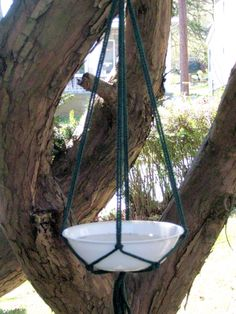 A bath for the birds I made from a simple bowl and hanging plant holder hung on our Yew tree. Our cat Cinder has had many happy hours watching the birds, squirrels, & chipmunks who live in or near our beloved Yew by the kitchen window.