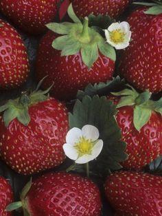 "Strawberry Tiramisu by Giada De Laurentiis  & Bon Appetit via ""La Belle Cuisine -- Fine Cuisine with Art Infusion"""