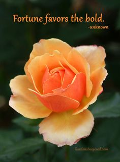 """""""Fortune favors the bold."""" Click on the photo to find more garden quotes."""