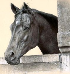 Equine Fine Art: Pencil - Charcoal & Pastel Horse Drawings (Dunway…