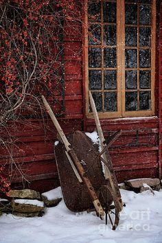 The Love of a White Christmas, ensphere: (via Farm and Barn)