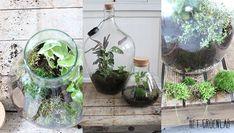 Verticale Tuin Intratuin : Beste afbeeldingen van tuin diy zelf maken intratuin in