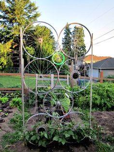 """Verticalizando o jardim / horta.  """"Treliça"""" feita com rodas de bicicleta.  Fotografia: wabikes.org"""
