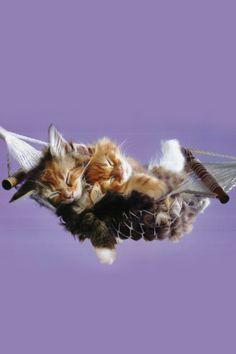 Cute Kittens Wallpaper from Cats. Cute Kittens, Cats And Kittens, Kitty Cats, Baby Kitty, Baby Animals, Funny Animals, Cute Animals, Funny Cat Videos, Funny Cats
