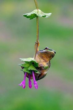 Hanging in there....