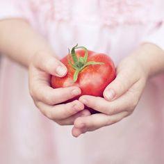 tomato child hands photograph / garden grow your own by shannonpix