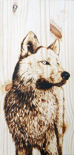 "Arctic Wolf on 12"" x 24"" Pine - Pyrography by Alexandra Glueckler"