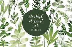 Watercolor Herbs set by swiejko on @creativemarket