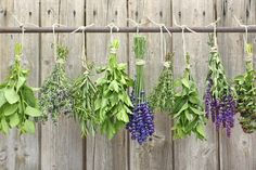 How to make your own Essential Oil ~ Simple, easy-to-follow tutorial from the Pioneer Settler