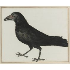 ITALIAN SCHOOL, 17TH CENTURY A CROW Bears number 983 in pen and brown ink, lower center Watercolor and gouache, laid down on the original mount 11 by 13 3/8 in. 27.8 by 33.7 cm ESTIMATE 8,000-12,000 USD Lot Sold: 37,500 USD PROVENANCE Cassiano dal Pozzo  Windsor Castle Paper Museum  Sotheby's