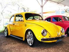 gorgeous yellow beetle