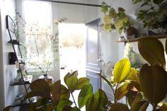 Louesa flower shop