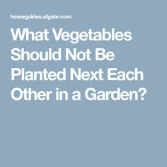 What Vegetables Should Not Be Planted Next Each Other in a Garden?