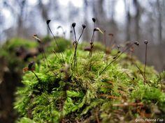 ... Творец создал зачем-то мох, а, значит, мох, отнюдь, не плох...