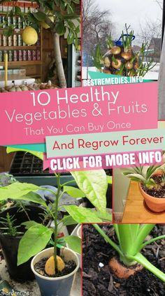 Onions, garlic and fresh herbs are staples in a lot of dishes, and they may be inexpensive, but when you use them on a daily basis it can add up. Some foods are easy to regrow at home from leftover scraps, and some of them can even be grown right on your kitchen counter. Here are 10 vegetables and herbs you can buy once and regrow forever.