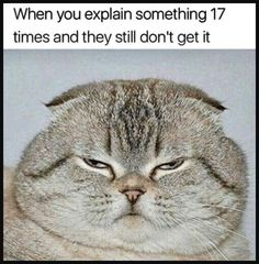 Check out these Funny Animals Memes which are funny and cute at the same time. These animal memes are trending all over the internet. Funny Animal Memes, Funny Cats, Funny Animals, Cute Animals, Memes Humor, Cat Memes, Funny Humor, Really Funny Memes, Softies