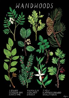 Wandwoods Dark Background C B Amanda Herzman C B Online Store - Wandwoods Dark Background Description Identification Guide For Magical Wandwoods Stock Levels Availability Powered By Storenvy Amanda Herzman Hello Im Amanda Im An Illu Wiccan, Magick, Witchcraft, Gravure Illustration, Illustration Art, Imagen Natural, Witch Aesthetic, Book Of Shadows, Dark Backgrounds