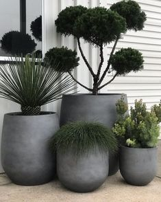 House Plants Decor, Patio Plants, Outdoor Potted Plants, Plants On Balcony, Outdoor Pots And Planters, Outdoor Flower Pots, Pots For Plants, Balcony Planters, Balcony Flowers