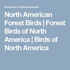 North American Forest Birds | Forest Birds of North America | Birds of North America