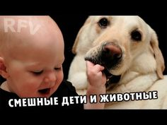 Дети и животные 2 · Приколы с животными 2015 · Cats, Dogs & Cute Babies ...