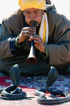 snake charmer, morocco