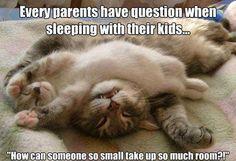 Kitten blanket!