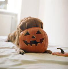 Favorite Halloween Hiding Spot