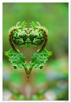 The ♥ heart of Nature