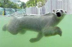 Wienin eläintarha julkaisi upeita kuvia ja videon Ranuan Ranzon uudesta kodista.