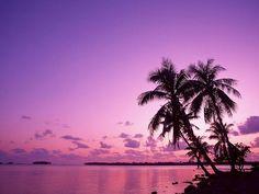 paisajes atardecer - Google Search Tree Sunset Wallpaper, Nature Wallpaper, Hd Wallpaper, Paradise Wallpaper, Palm Tree Sunset, Blue Sunset, Palm Trees, Sunset Beach, Christmas Tree Silhouette