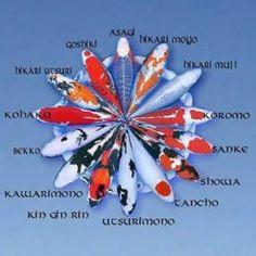 Aquaponics | CCRES AQUAPONICS KOI | CCRES