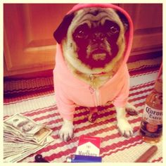 Bella wears the #AmericanApparel Dog Hoodie