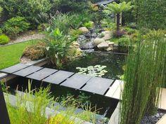 Une vue d'un jardin contemporain avec un bassin et des plantes aquatiques