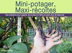 10 légumes pour le potager du débutant - Garden Tips For Beginners