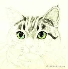 Image Result For How To Draw Realistic Cats Mit Bildern