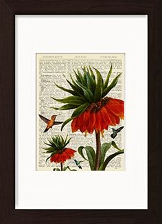 Hummingbirds with Red Flowers Mounted / Matted Ready To Frame Dictionary Art Print. Mounted /Matted and Printed on 1890's Italian Dictionary. All our dictionary pages have that beautiful golden patina color that only comes from age. The result is a unique and absolutely beautiful print that is definitely a conversation piece. Page Size 180 mm x 140 mm / 5.5 x 7.5 inches. Mount Opening 130 mm x 170 mm / 5 x 6.5 inches. FRAME NOT INCLUDED. Every print comes with a mat/mount which means the...
