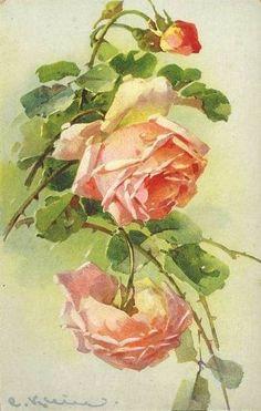 Catherine Klein ~ peach roses
