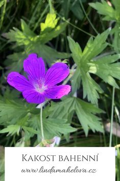 Herbalism, Plants, Herbal Medicine, Plant, Planets