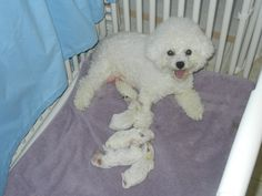 Mom & puppie.  Mom looks good after giving birth! ;>
